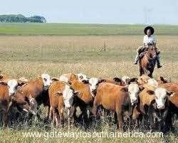Beef Argentina