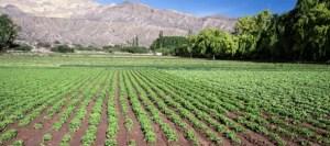 argentine farmland