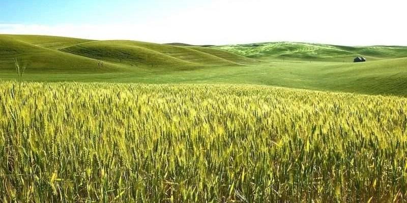 imagen de la inversión en tierras de cultivo