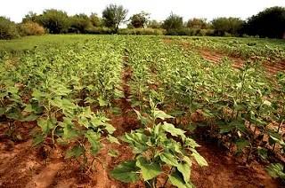 estancia-punta-del-agua-crops