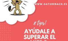 Portada blog 8 tips miedo
