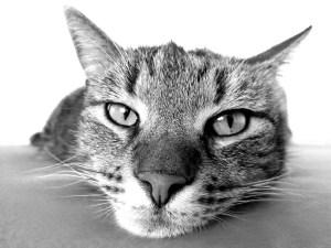Raffreddore-gatto