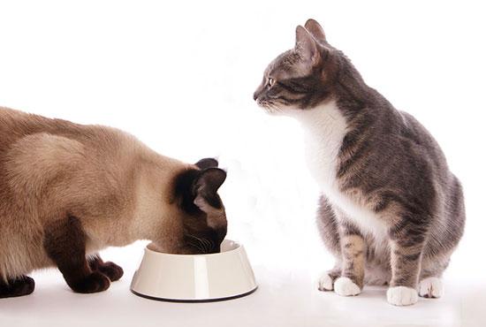 Come trasformare la dieta del tuo gatto in una dieta a base di carne cruda: la dieta BARF