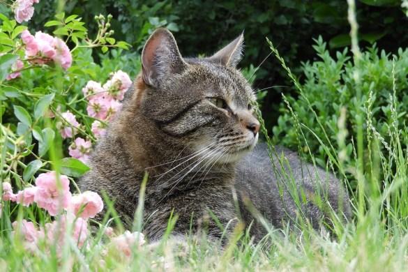 gatto-controlli-prima dell estate