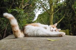 posteriore-gatto