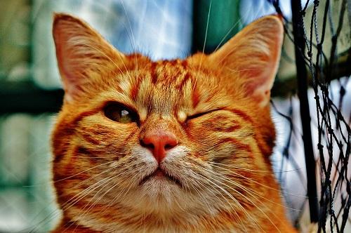 Cerchi i giocattoli perfetti per i tuoi gatti? Ecco alcuni consigli