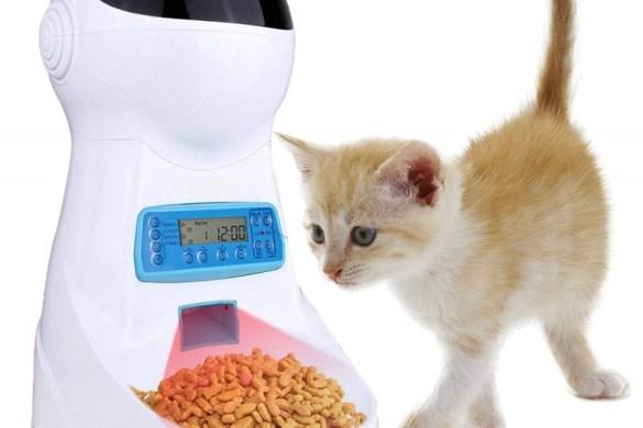 alimentatore-di-cibo-per-gatti-foto