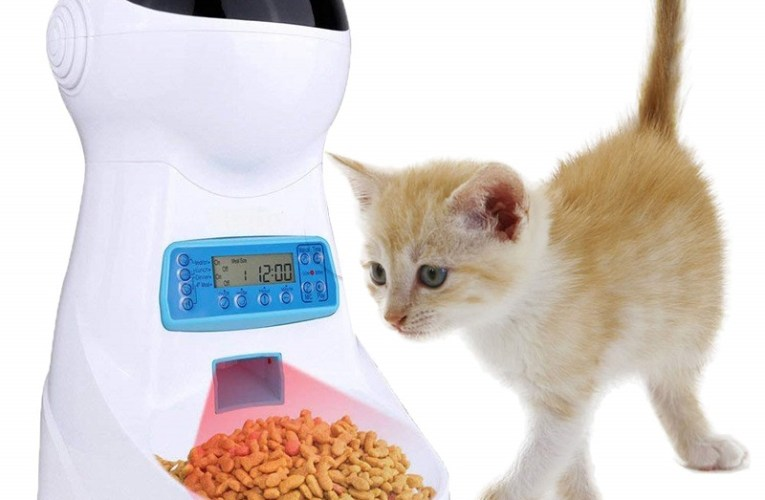 Distributore automatico cibo per gatti:  i migliori alimentatori automatici per gatti