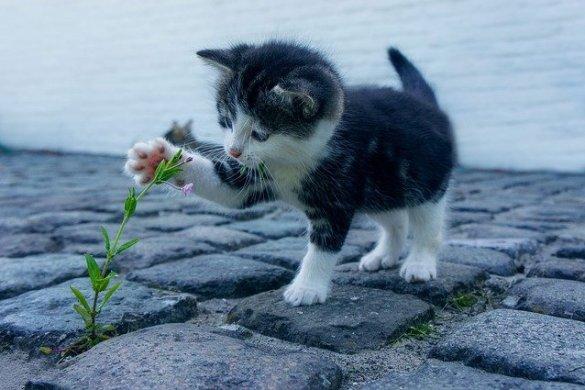 feromoni gatto