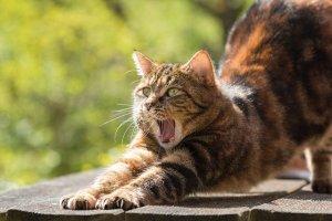avvelenamento gatto