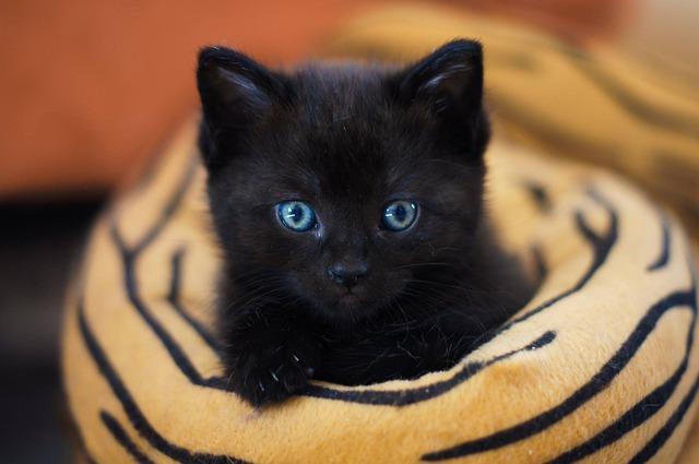 Crescita del gatto: Guida