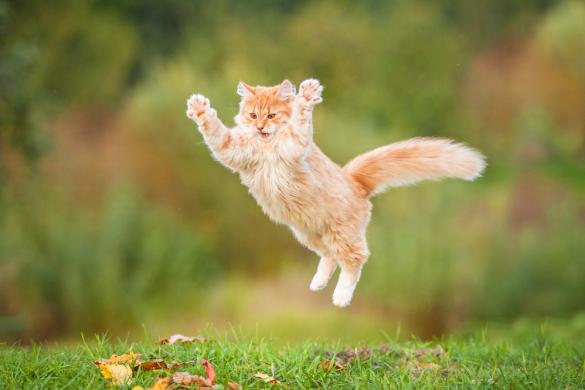gatto-addestramento