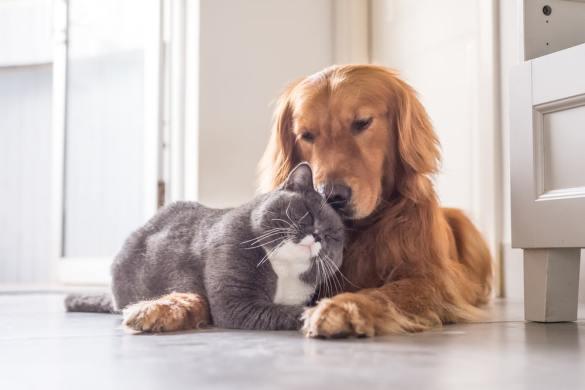 convivenza cani-gatti