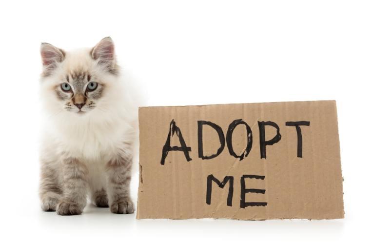 Adottare o acquistare un gatto