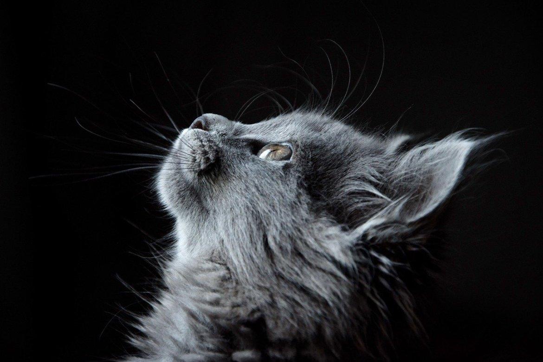 età del gatto