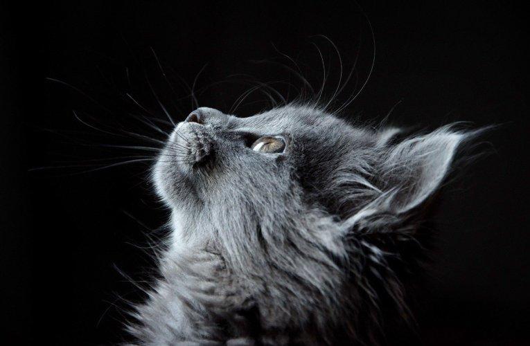 Età del gatto: come capire quanti anni ha