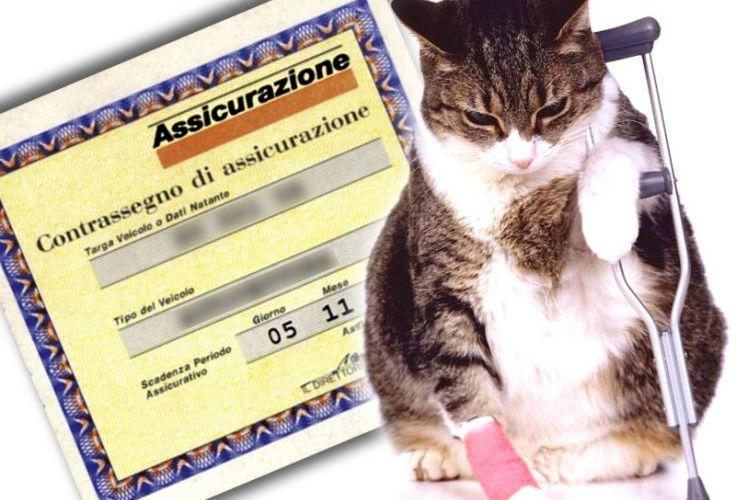Assicurazioni e costi per tutelare i nostri gatti