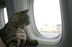 volare con il gatto
