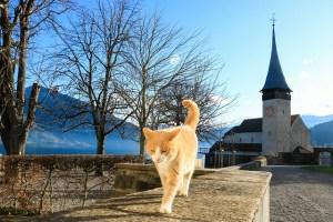 gatto chiesa