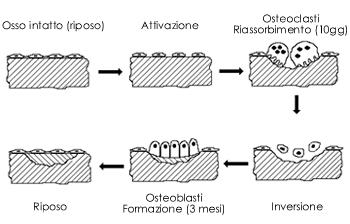 ciclo di rimodellamento