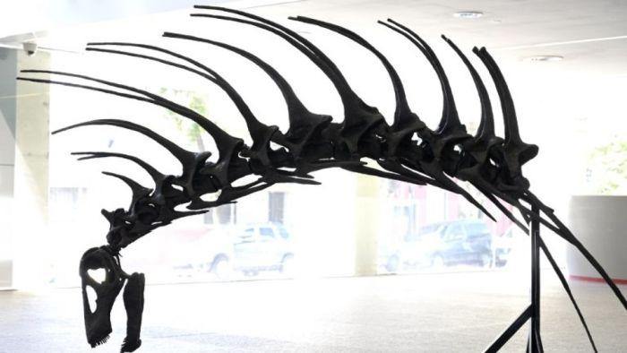 Bajadasaurus pronuspinax argentina dinosauri