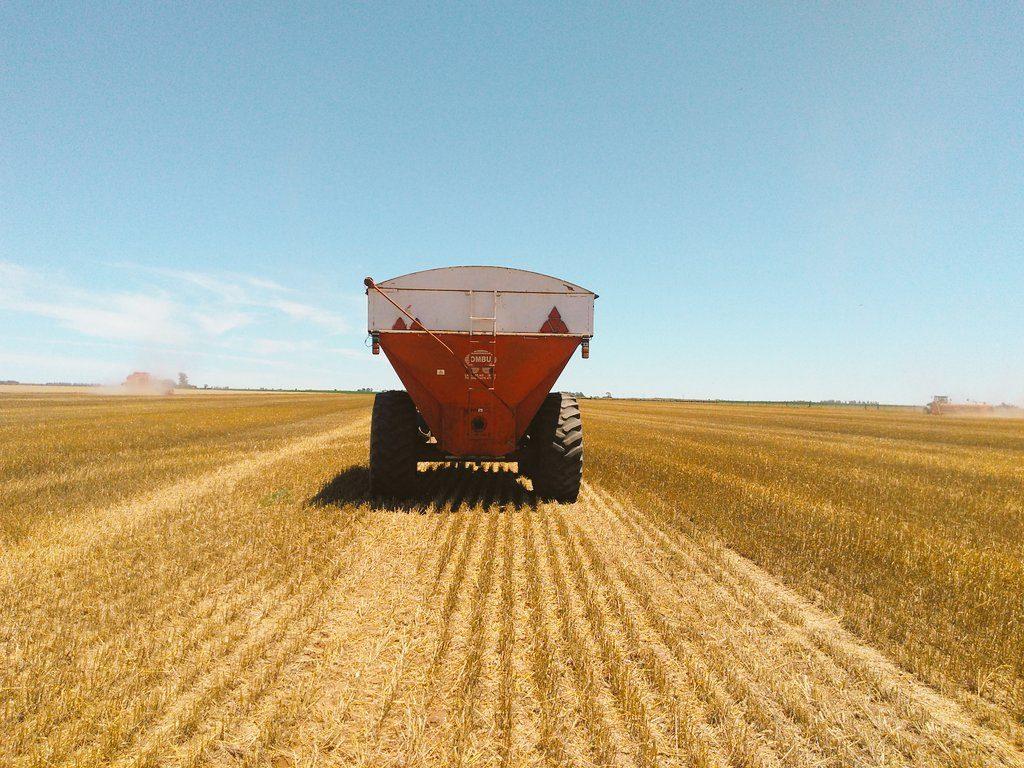 argentina raccolto grano record 2019