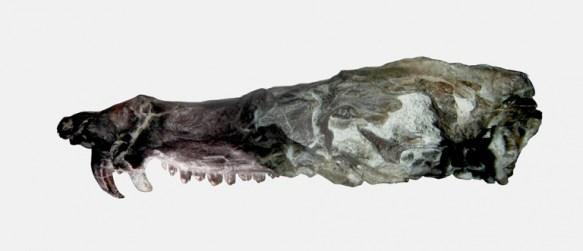 argentina scoperto animale preistorico scrat era glaciale paleontologia