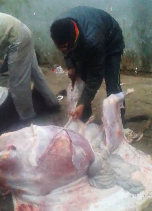 सैदपुर में दिनदहाड़े दर्जनों लोगों ने मिल कर की गाय की हत्या