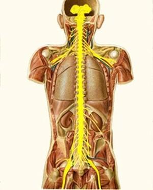 נזק בלתי הפיך בחוט השדרה
