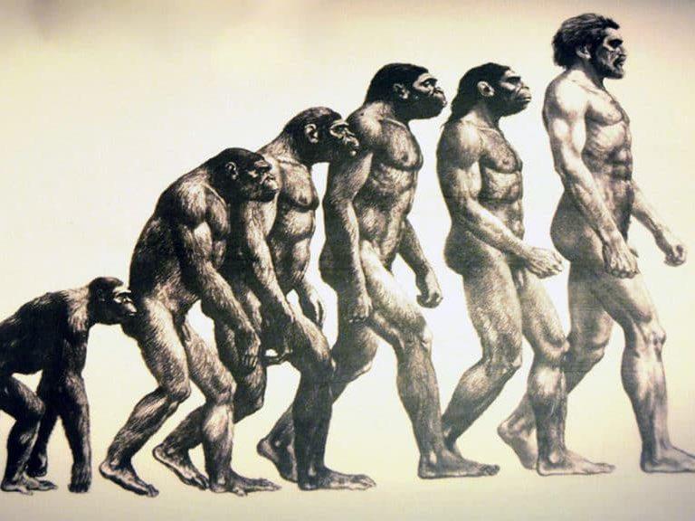 כאבי גב האבולוציה אשמה