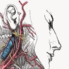 עמוד שדרה צווארי סימפטומים