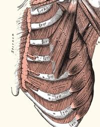 כאבים בצלעות אבחון וטיפול