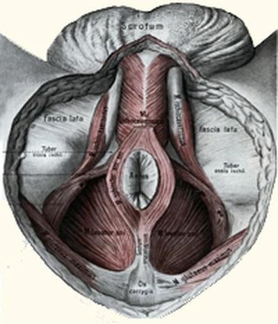 תפקוד לקוי של שרירי רצפת האגן