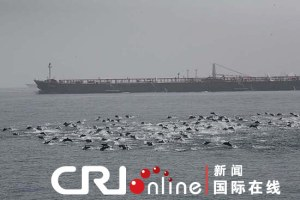 Dolphins protecting chinese ships from pirates