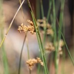 01. Riparian Wetlands