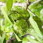 Nasuha Herbs & Spices Paradise