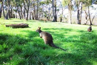 Kangaroo Island,Adelaide