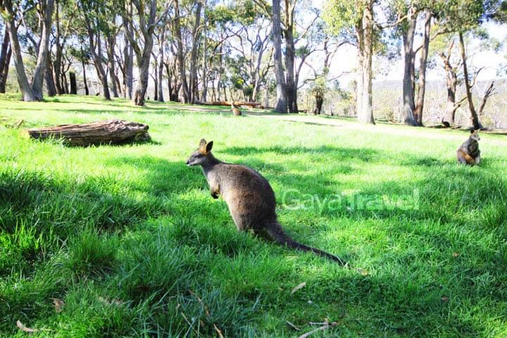 Adelaide Part 2, Kangaroo Island