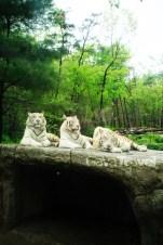 World Safari at Everland