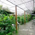 Perak Herbal Garden