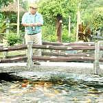 The tour guide of Desaru's fruit farm feeding fishes