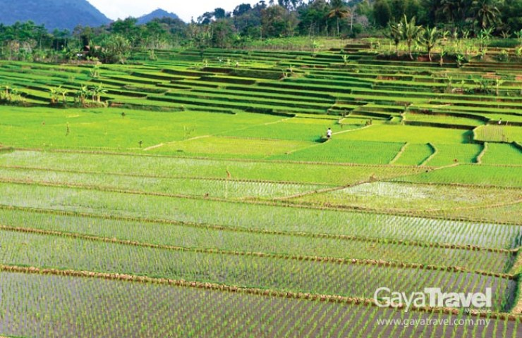 Rice Terrace in Garut