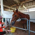 You are also given the chance to feed the horses