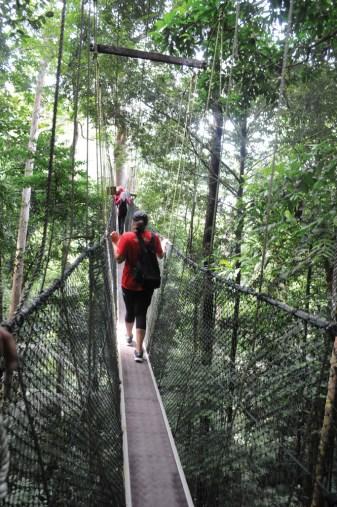 Canopy walk at Taman Negara Malaysia