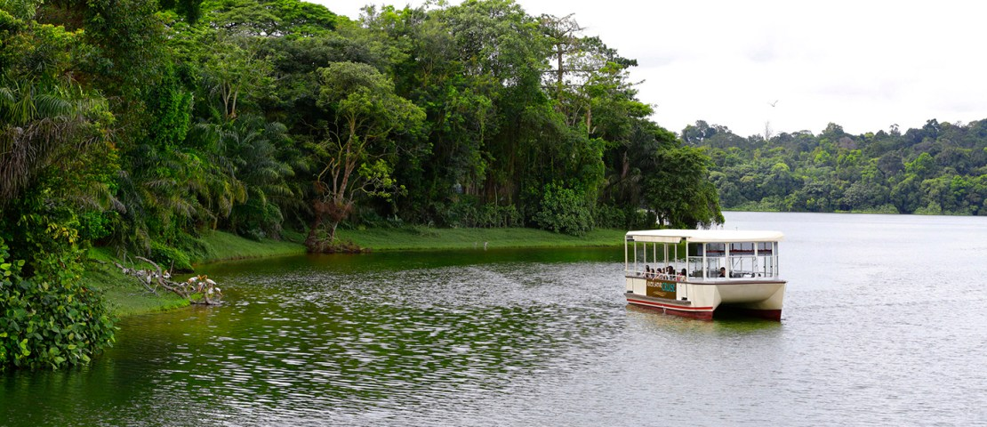 Discover Nature Aboard New River Safari Cruise In Singapore