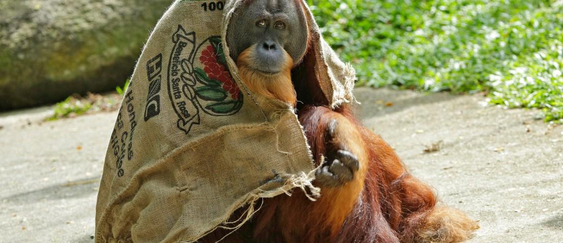 Wild Ways To Beat The Heat At Singapore Zoo