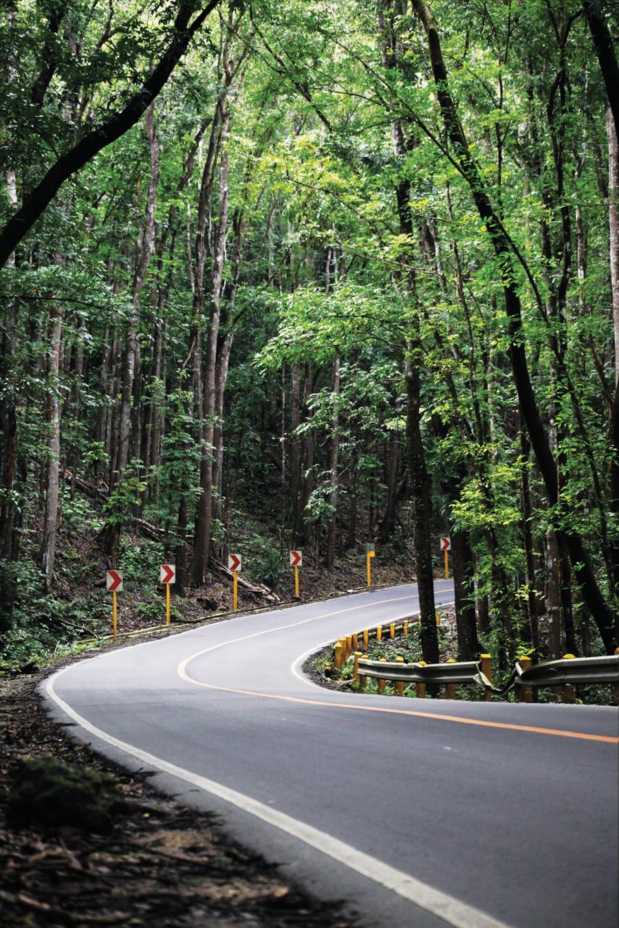 Bilar Mahogany Man Made Forest