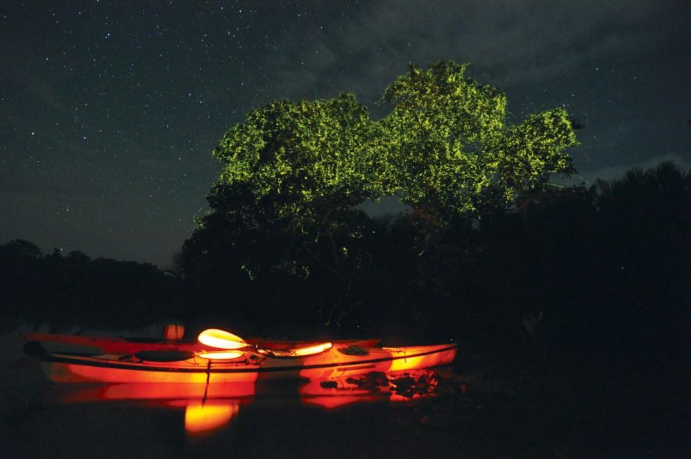 Bohol-Fireflies