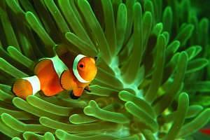 Underwater life at Mataking Island