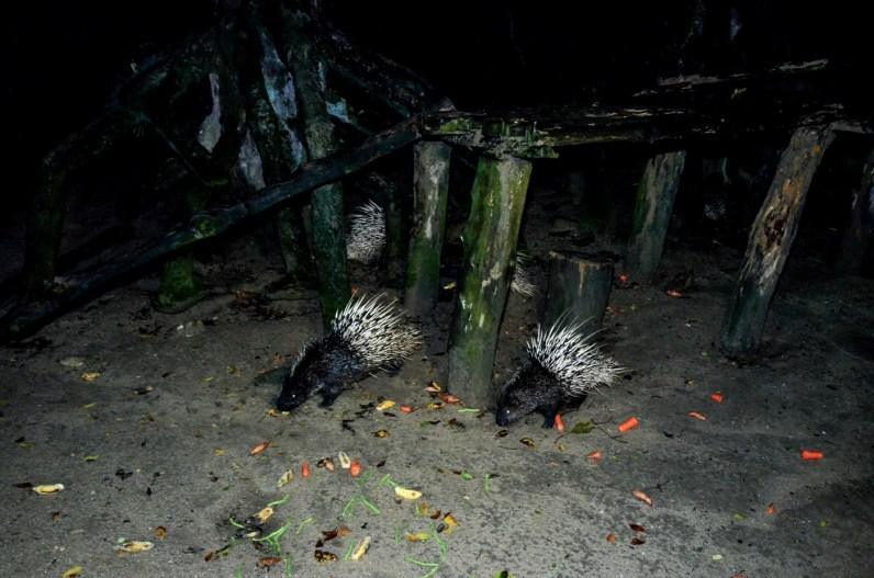 Zoo Taiping and Night Safari